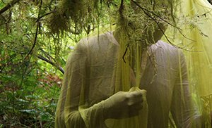 Verdure: The Rainforest Films